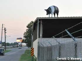 roof-pig